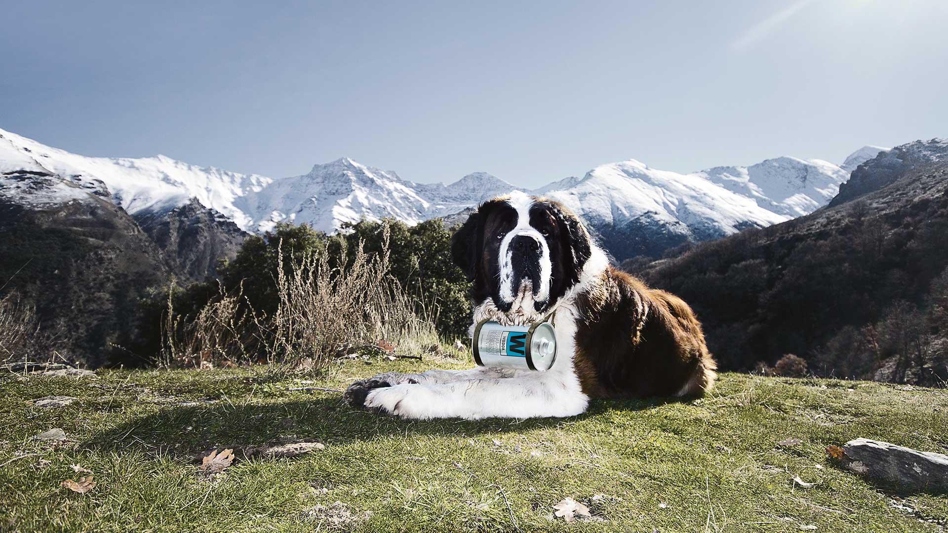 Wodqa + Rettungshund
